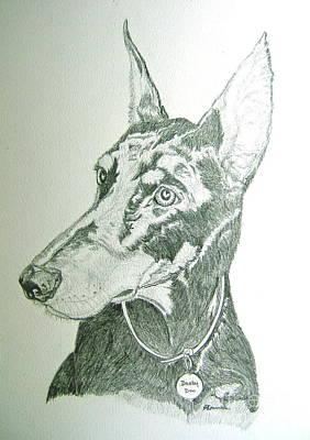 Doberman Drawing - Darby by Nancy Rucker