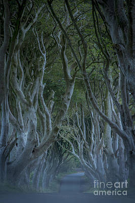 Dark Hedges - Misty Night Print by Brian Jannsen