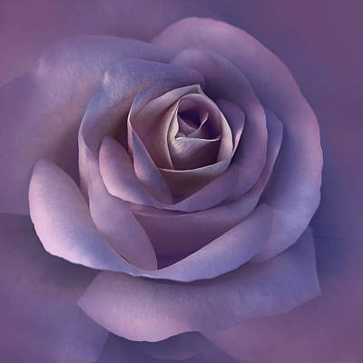 Rose Portrait Photograph - Dark Plum Rose Flower by Jennie Marie Schell