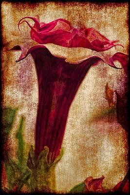 Dcor Photograph - Datura Trumpet by Geraldine Scull
