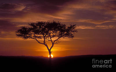 African Landscape Photograph - Dawn On The Masai Mara by Sandra Bronstein