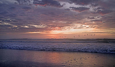Violet Photograph - Dawn Patrol by Betsy Knapp