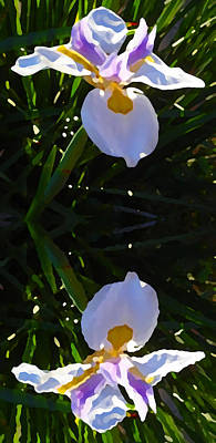 Day Lily Reflection Print by Amy Vangsgard
