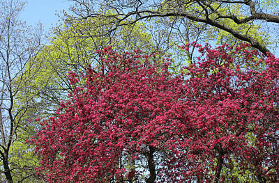 Cherry Photograph - Day Of Beauty by The Art Of Marilyn Ridoutt-Greene