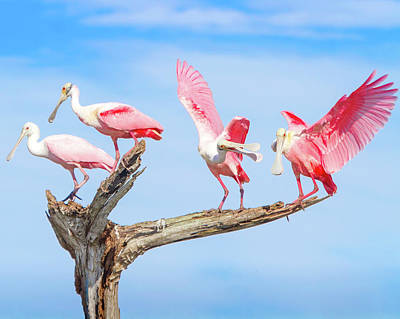 Spoonbill Photograph - Day Of The Spoonbill  by Mark Andrew Thomas