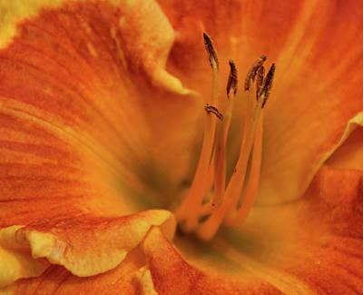 Daylily Close-up Print by Sandy Keeton