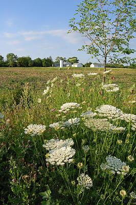 Days Of Queen Annes Lace - Rural Scene Print by Suzanne Gaff