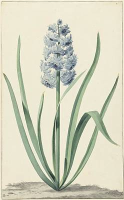 De Blauwe Hyacint Franciscus Print by MotionAge Designs