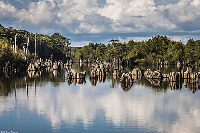 Cypress Stump Photograph - Dead Lakes Florida by Debra Forand