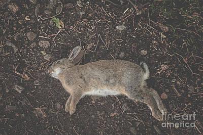 R.i.p Photograph - Dead Rabbit by Patricia Hofmeester