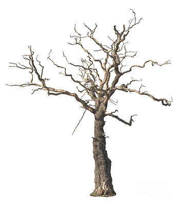 Dead Tree Print by Amanda Elwell