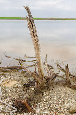 Nature Photograph - Dead Tree By The Salt-lake by Iordanis Pallikaras