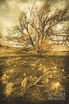 Hollow Photograph - Dead Tree In Seasons Bare by Jorgo Photography - Wall Art Gallery