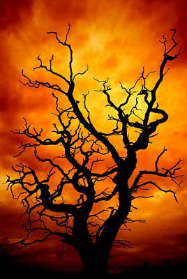 Unreal Photograph - Dead Tree by Meirion Matthias