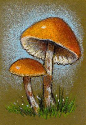 Drawing - Deadly Galerina Mushrooms In Color Pencil by Joyce Geleynse