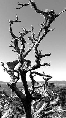 The Void Photograph - Deadwood by Rick Maxwell
