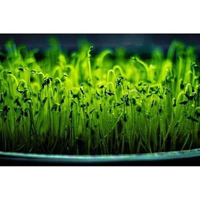 Nature Photograph - Green by Vida R