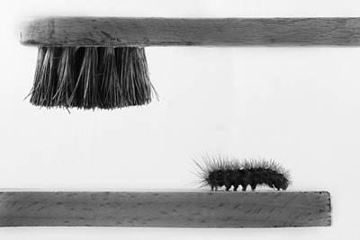Caterpillar Photograph - ...dear Friend by Stefano Mallus