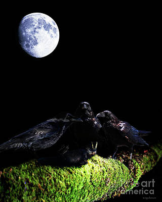 Raven Mixed Media - Death Of A Young Raven by Wingsdomain Art and Photography