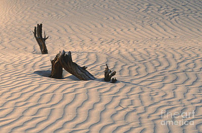 Death Valley Morning Print by Sandra Bronstein