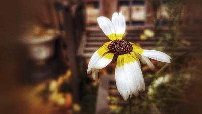 Flower Express Photograph - Debussy - Jardins Sous La Pluie by Isabella Abbie Shores