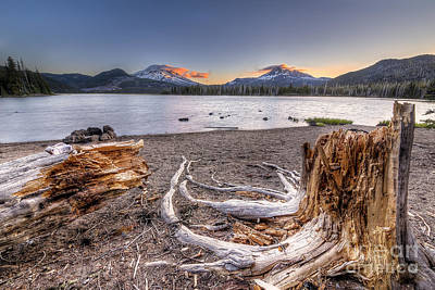 Oregon Photograph - Decaying Trees On Sparks Lake by Twenty Two North Photography