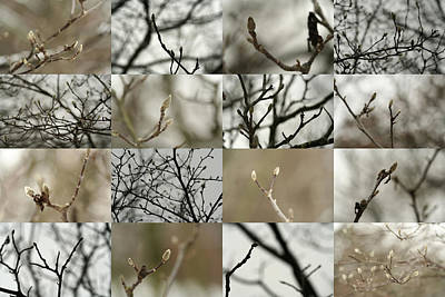 Rob Glover Photograph - December Buds by Robert Glover