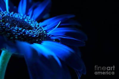 Blue Flowers Photograph - December Soul by Krissy Katsimbras