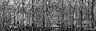 Deep Forest Bw Print by Az Jackson
