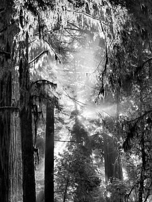 Deep Forest Light Print by Leland D Howard