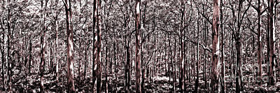 Greenery Photograph - Deep Forest Sepia by Az Jackson