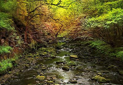 Deep In The Woods Print by Svetlana Sewell