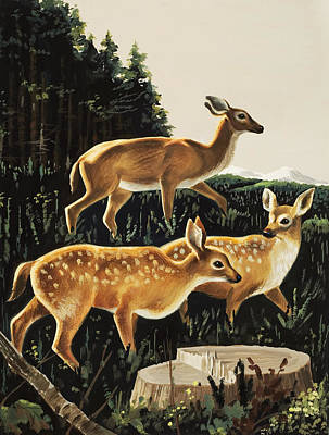 Deer In Forest Clearing Print by English School