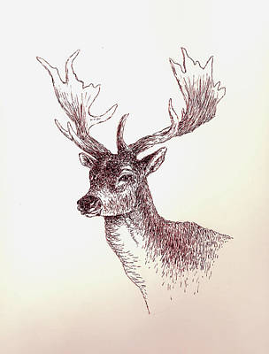 Deer Drawing - Deer In Ink by Michael Vigliotti