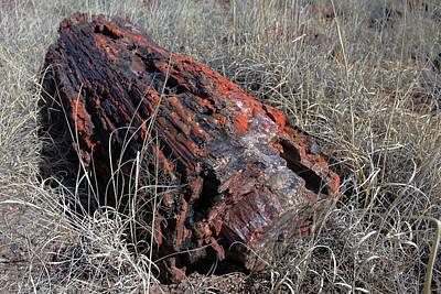 Petrified Forest Arizona Photograph - Defying Eternity by Gary Kaylor