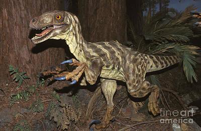 Deinonychus Antirrhopus Print by Gerard Lacz