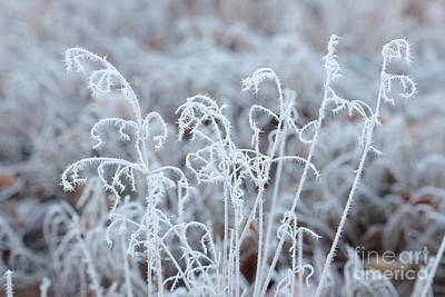 Abstract Photograph - Delicate Hoarfrost by Carol Groenen