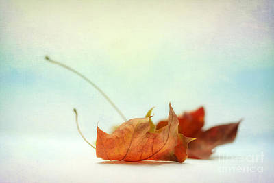 Delicate Shining Leaf Print by SK Pfphotography