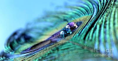 Peacock Photograph - Delicate Treasure by Krissy Katsimbras
