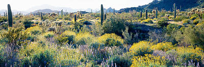 Cholla Photograph - Desert Az by Panoramic Images