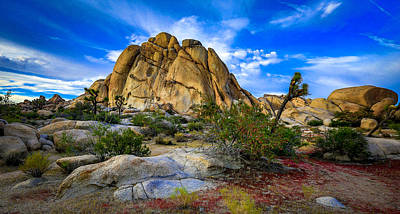 Joshua Tree Photograph - Desert Color Joshua Tree by Casey Kiernan