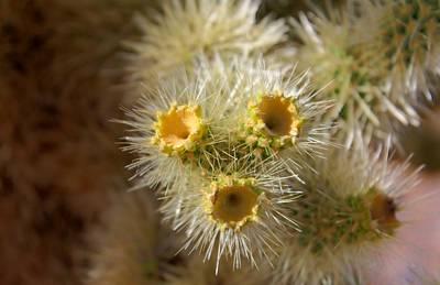 Digital Art - Desert Flora by Dan Stone
