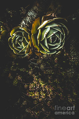 Desert Flowers Print by Jorgo Photography - Wall Art Gallery