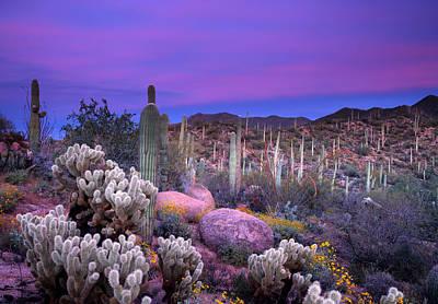 Saguaro Photograph - Desert Garden by Eric Foltz