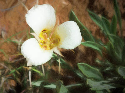 Desert Mariposa Lily Print by Penny Lisowski