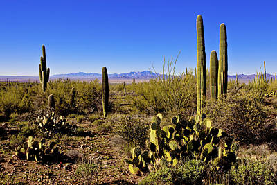Saguaro Photograph - Desert Spring by Chad Dutson