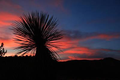 Sunset Photograph - Desert Sunset by Edward Betz