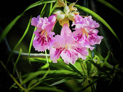 Desert Willow Print by Penny Lisowski