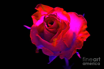 Colorful Roses Photograph - Desire by Krissy Katsimbras