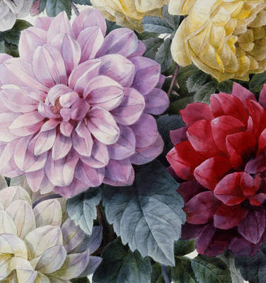 Detail Of Dahlias And Roses Print by Camille de Chantereine